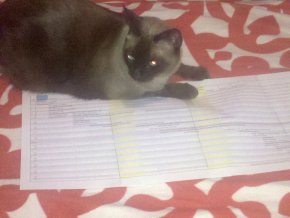 Spreadsheet, with Ikea Blanket and Obnoxious Cat