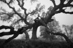 The Forgiving Tree Part II